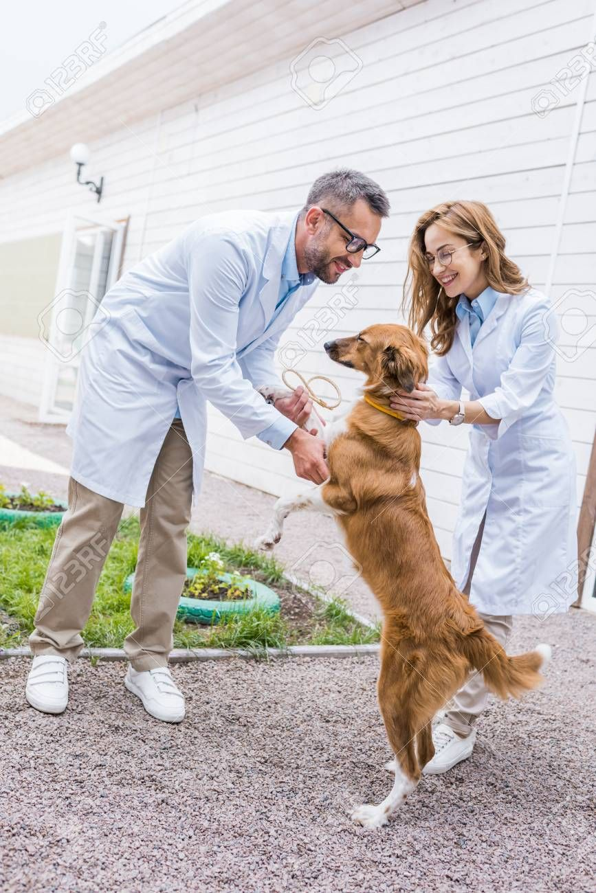 Two Veterinarians Playing With Dog On Yard At Veterinary Clinic Stock Photo Sponsored Dog Yard Veterinarians Pla In 2020 Dogs Veterinary Clinic Veterinarian