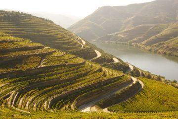 As nossas vinhas, o romance das cidades portuguesas, as praias e os recantos escondidos. Estes lugares estão a conquistar o coração das empresas de turismo. Saiba quais são na fotogaleria.