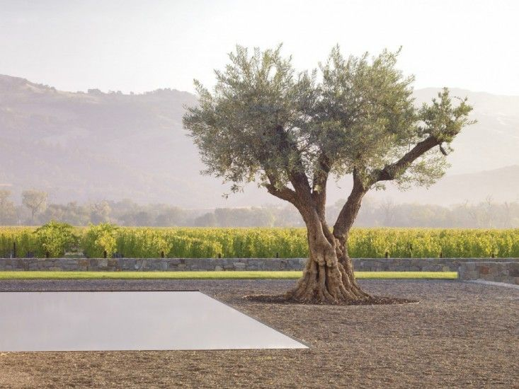 Architects Roundup 10 Landscapes Designed Around A Single Tree Landscape Design Mediterranean Garden Design Beautiful Gardens