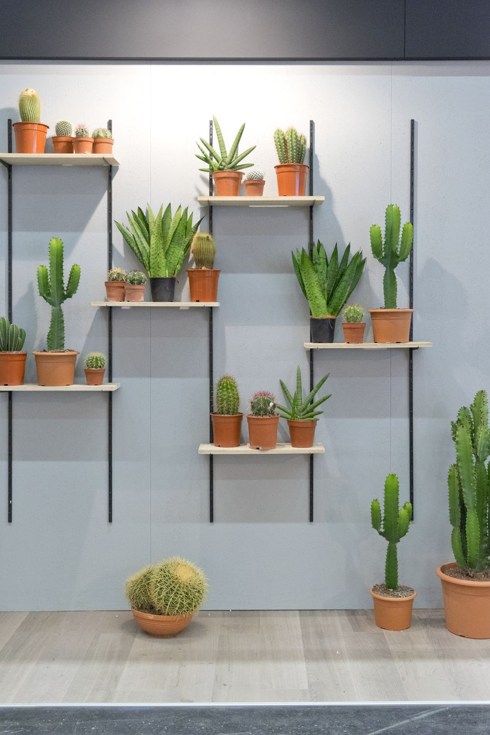 Plant Trends From Imm 2017 In Cologne Decora 231 227 O De