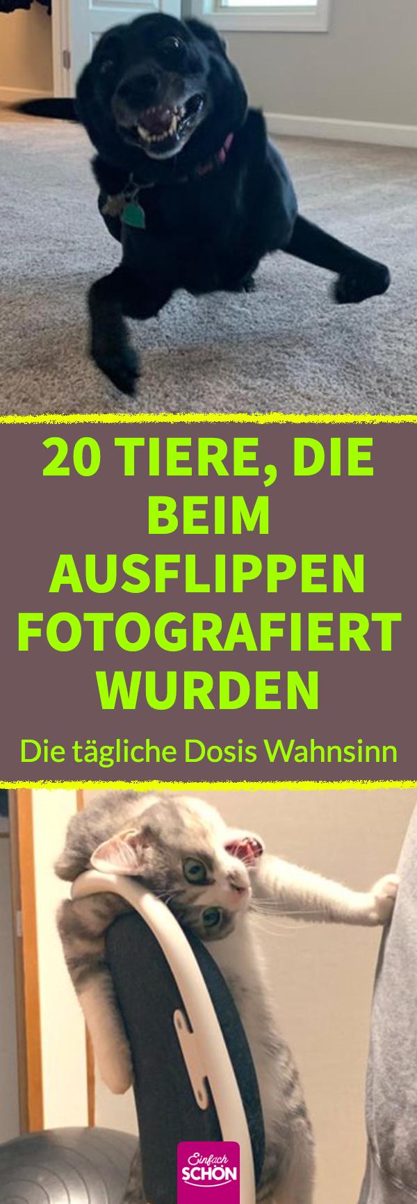 20 Tiere, die beim Ausflippen fotografiert wurden Lustige ...