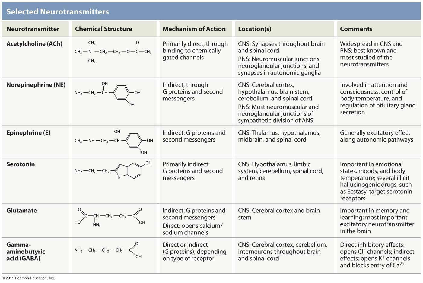 Neurotransmitters Chemically Gated Channels