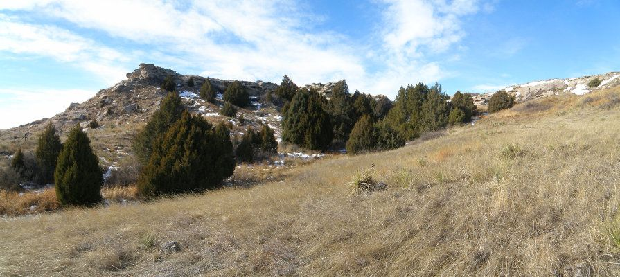 The third arroyo we encountered had a small woods of Junipers, and a spring.