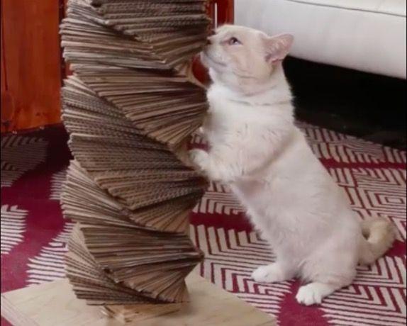 griffoir chat a faire soi meme