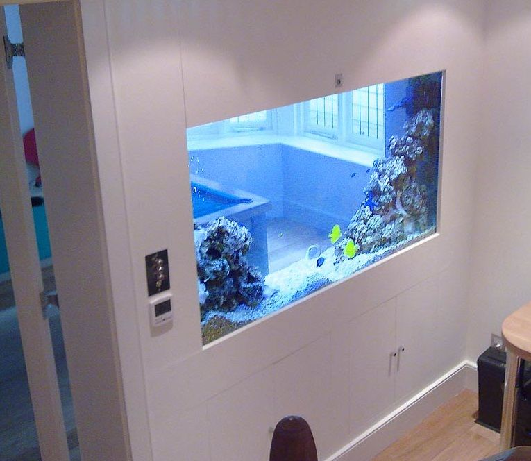 GroBartig Desain Aquarium Dinding Tampak Atas » Gambar 11 Fish Tanks, Dream Rooms,  Design Ideas