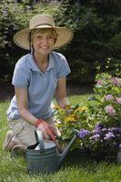 senior citizen retirement activities   Activity Ideas for Retirement Centers thumbnail