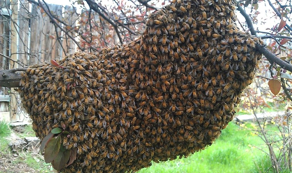 Park Art|My WordPress Blog_Are There Free Bee Removal Services