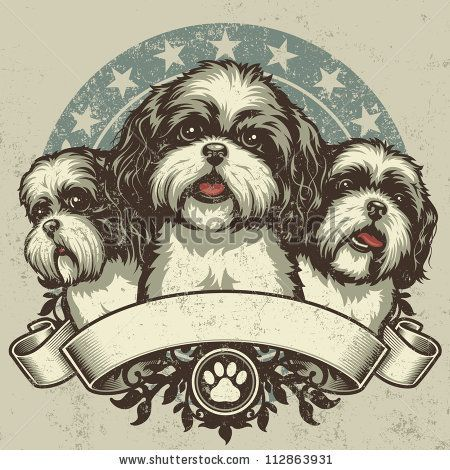 Shih tzu Stock Photos, Images, & Pictures   Shutterstock   Shih ...