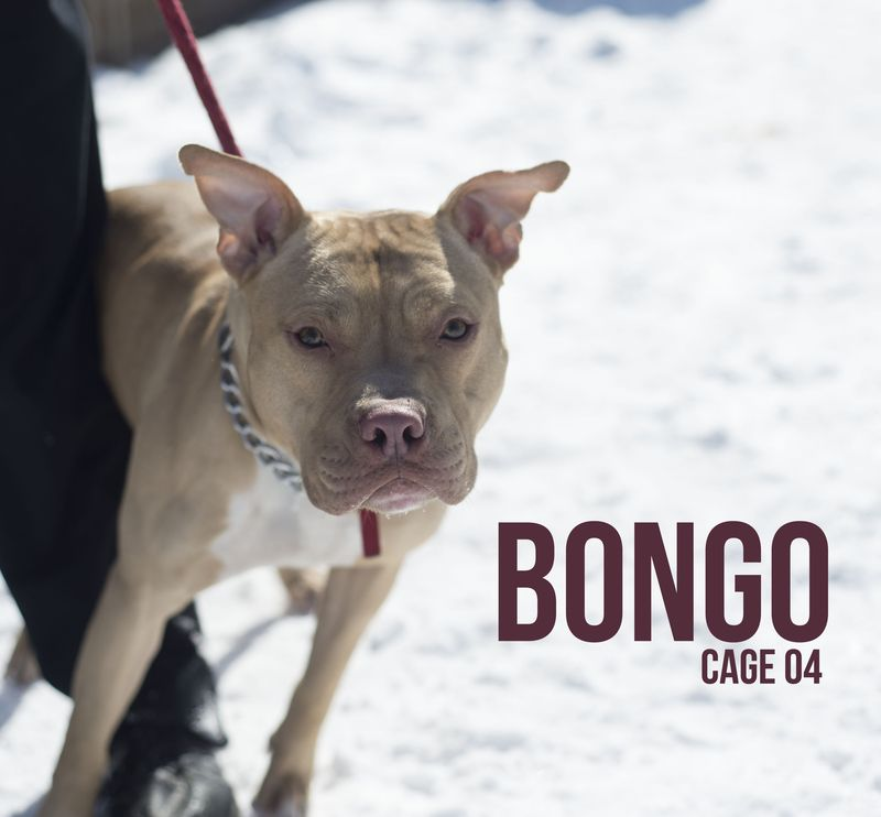 Adopt 04 Bongo Adopted On Adoptable Pets Dogs Shelter Dogs