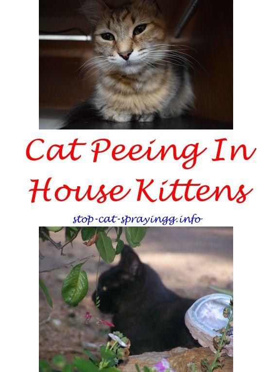 How To Stop Cat Spraying Front Door Cat Urine Cat Urine Smells