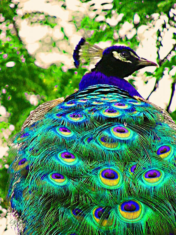 Peacock Bird Closeup | Beauty and the slayer of serpents