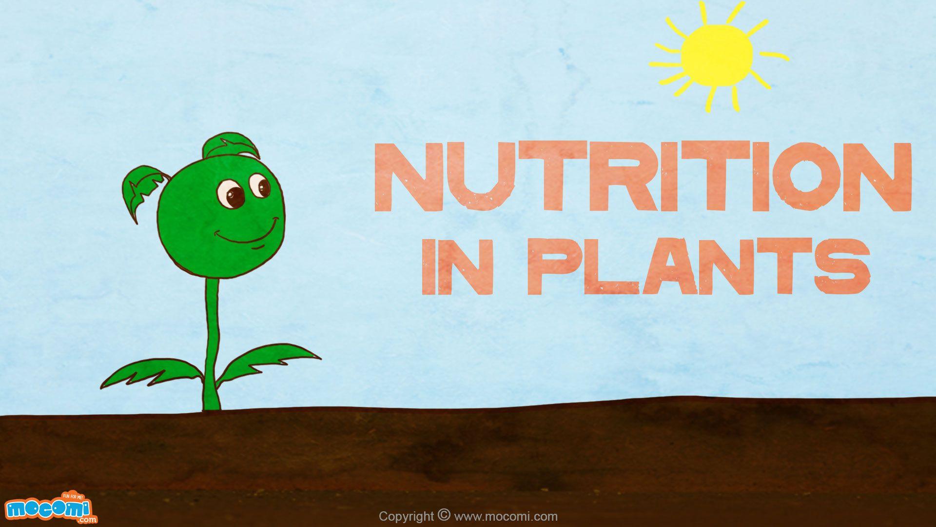 Nutrition In Plants Biology For Kids Science For Kids