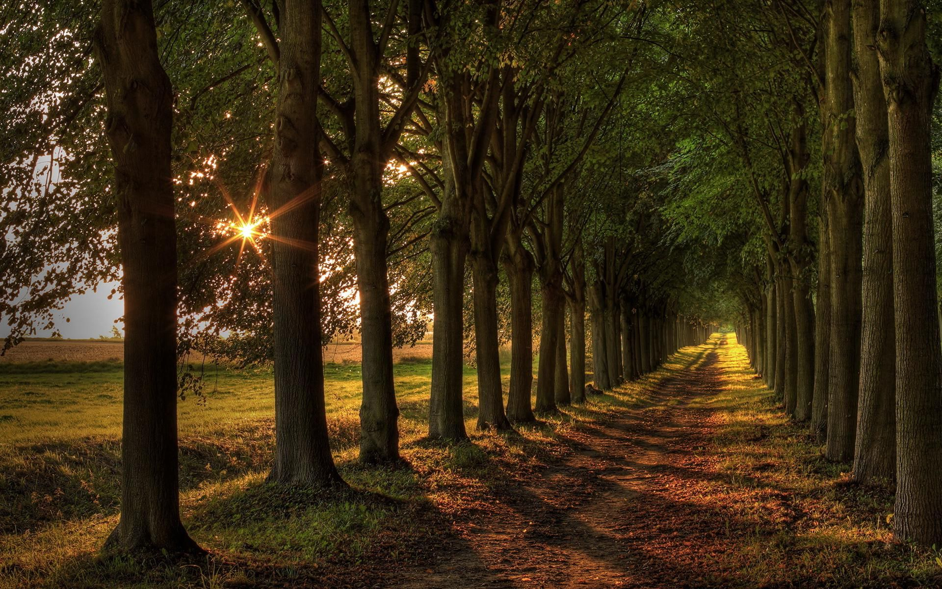 awesome trees road sunset wallpaper