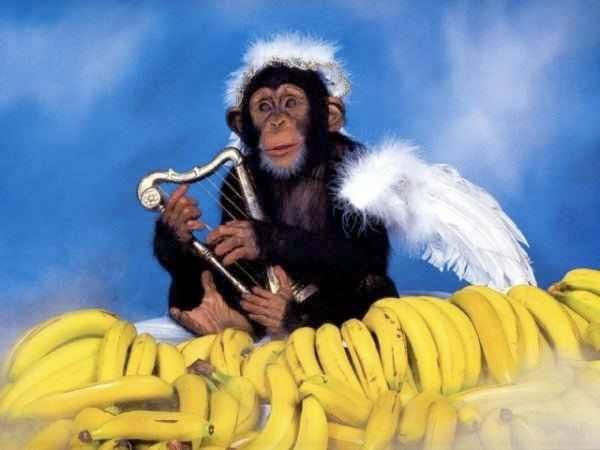 Monkey Angel :)