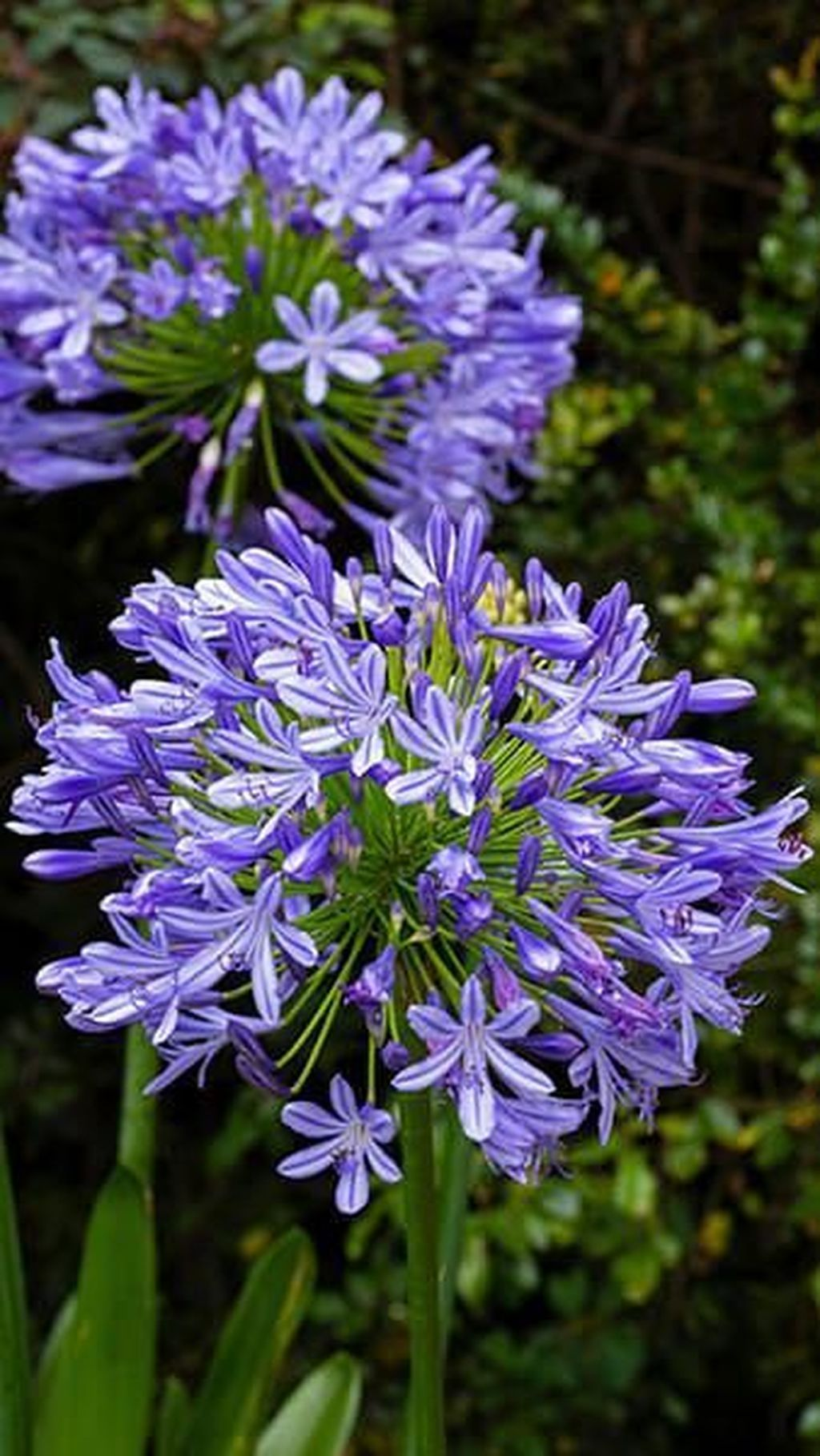 20 Stunning Spring Flower Garden Ideas With Perfect Lighting To Increase Your Design In 2020 Purple Flowers Garden Spring Garden Flowers Late Summer Flowers