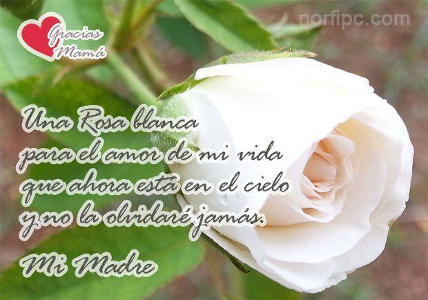 Image Result For Dia De Las Madres Poemas Cortos Con Imagenes