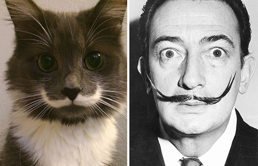 cat-looks-like-other-thing-lookalikes-celebrities-29__700