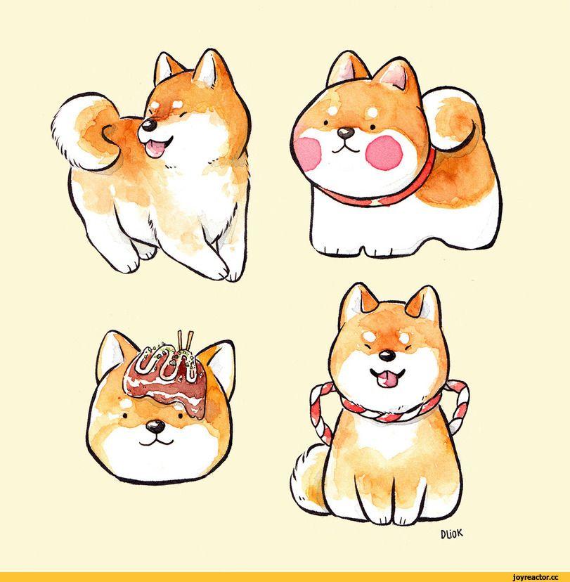 Dliok,Сиба-ину,собака,собакен, собакены, собаки, щенки ...