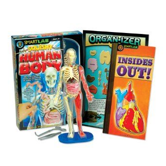 Amazon.com: Squishy Human Body: Lucille M. Kayes: Toys & Games