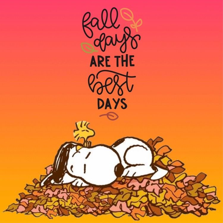 I absolutely ♥️ the Fall! 🍃🍁🍂💚💛🧡❤️   Snoopy love, Snoopy pictures,  Snoopy quotes
