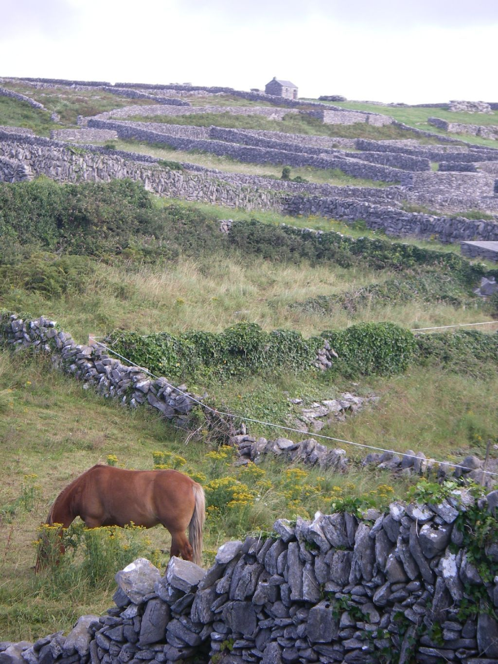 Inisheer, Aran islands, Ireland https://www.facebook.com/IrelandOfAThousandWelcomes?hc_location=timeline