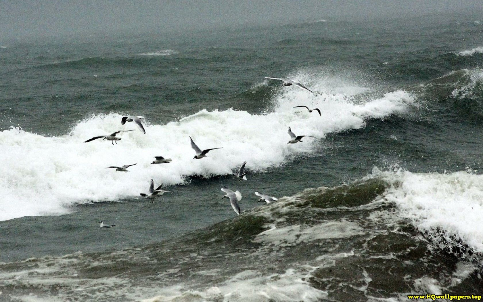 Gulls Feed Off The Debris Stirred Up By Breaking Waves