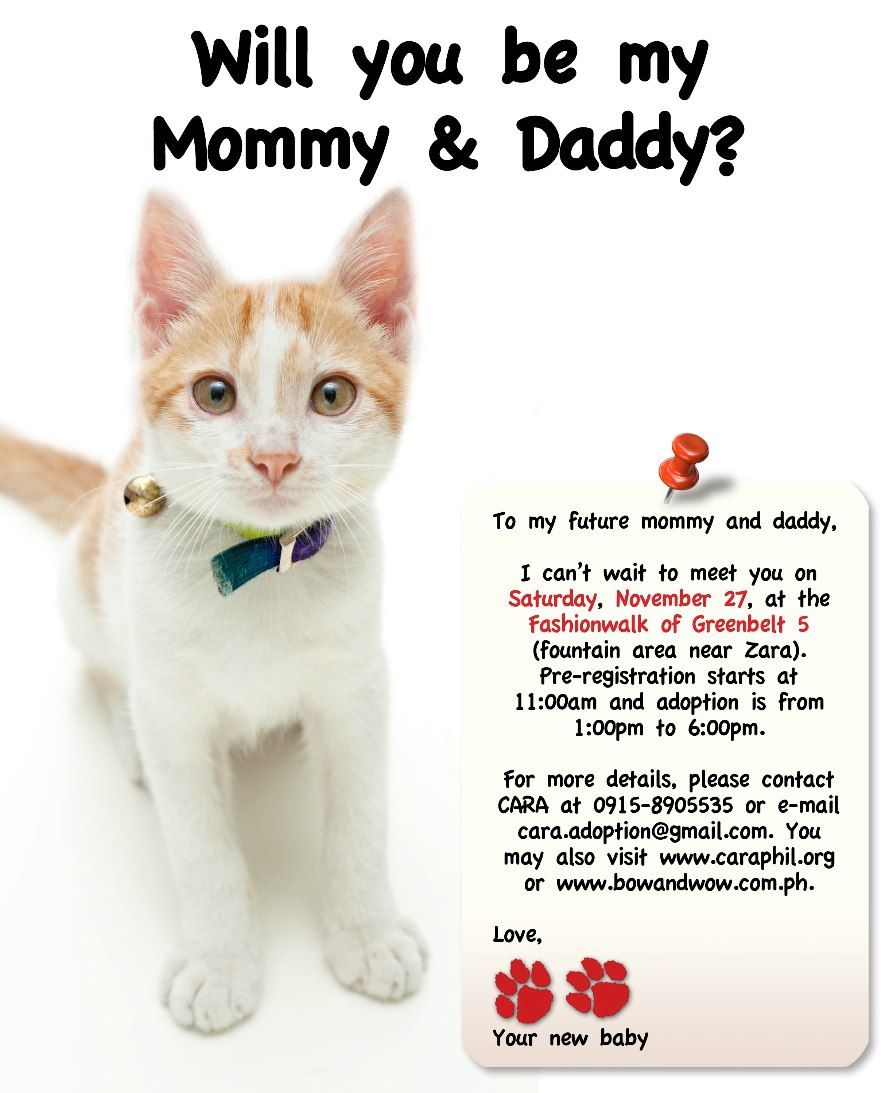Pin by Almond Child on Spay Neuter & Adopt