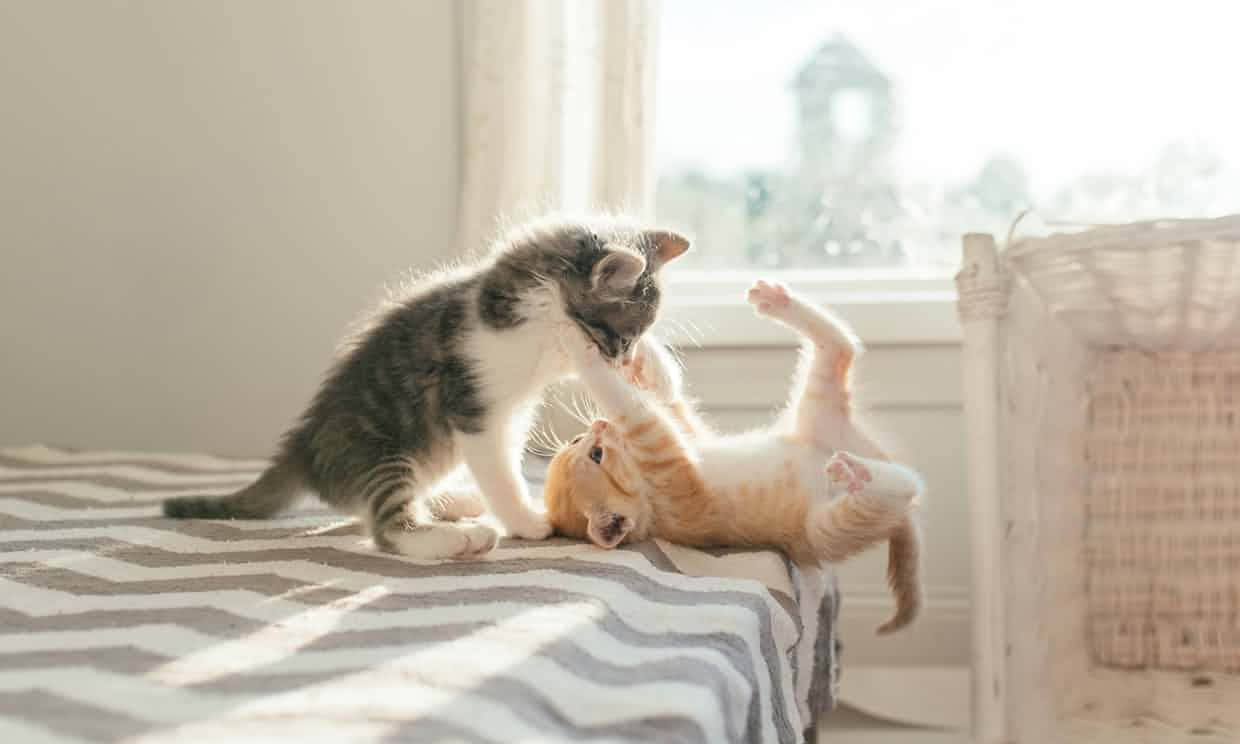 Why are kittens so cute? You asked Google – heres the answer