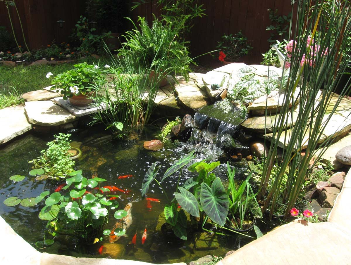 Cool pond plants gorgeous this would look awesome in the for Patio koi pond