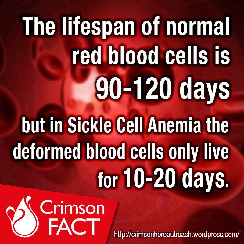 Pin On Crimson Facts