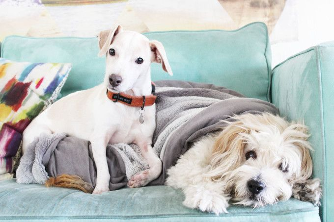 7 Feng Shui Essentials For Happy Pets The Tao Of Dana Happy Animals Pets