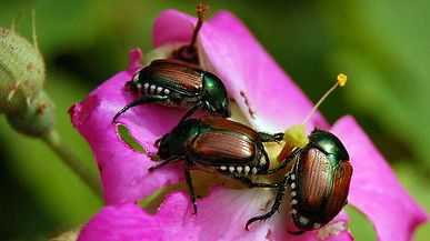 Pin By Spray N Grow Gardening On Bad Garden Bugs Id Who S