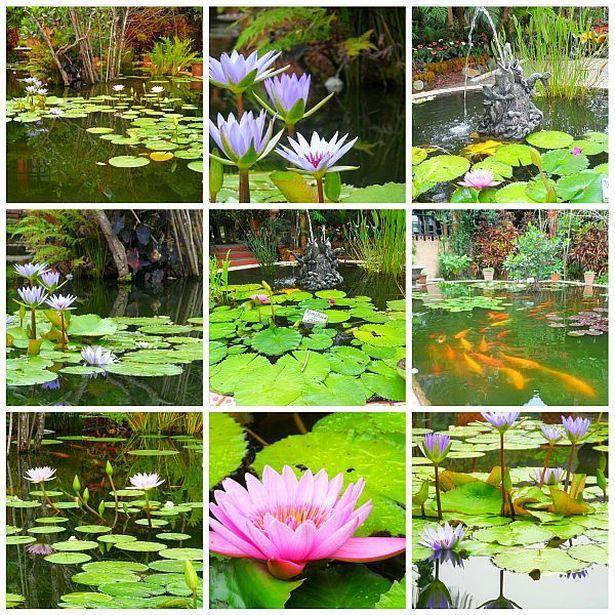 Aquatic life at puerto vallarta botanical gardens - Puerto vallarta botanical gardens ...