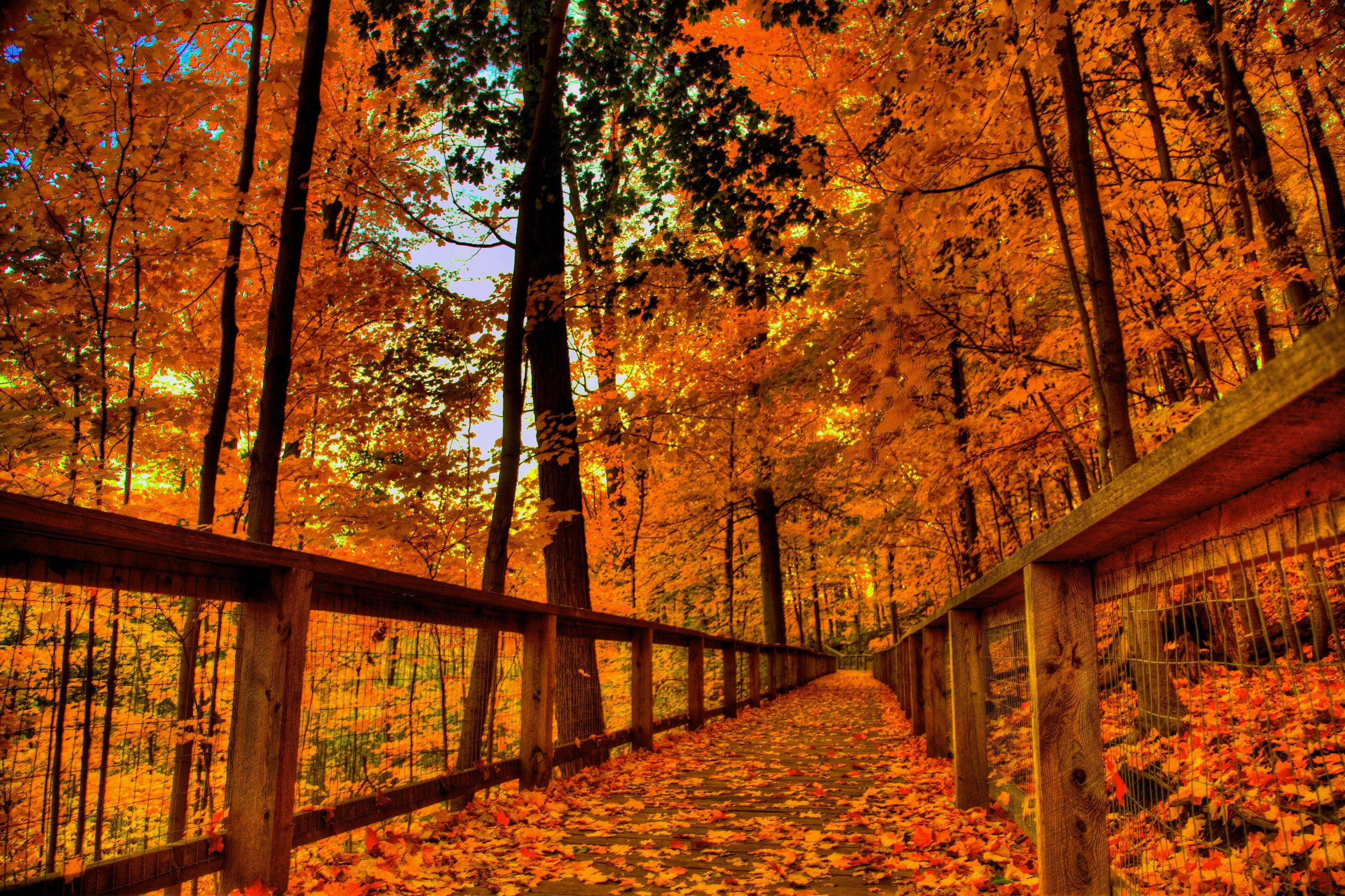 autumn wallpapers for android