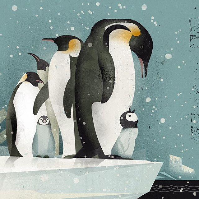 Dieter Braun Illustration Tierillustrationen Pinguin Illustration Illustration Tiere
