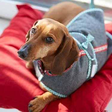 Trachtenjanker GU Lieblingsstücke für den Hund | hund | Pinterest ...