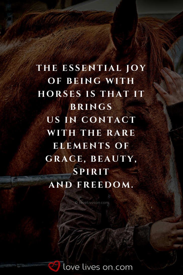 50 Beautiful Loss Of Pet Quotes Equestrian Animal Quotes Pets
