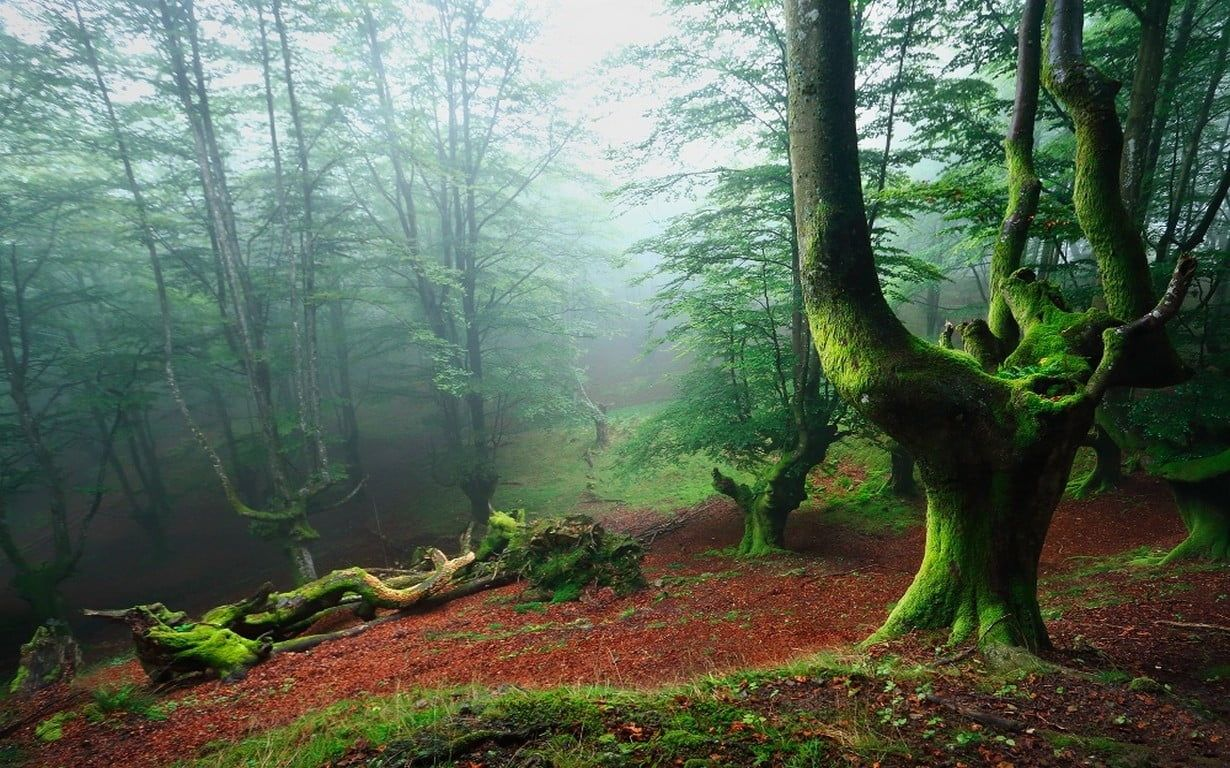 Forest Wallpaper Landscape Nature Forest Mist Leaves Moss Trees Spain Green 480p Wallpaper Hdwallpaper Desktop