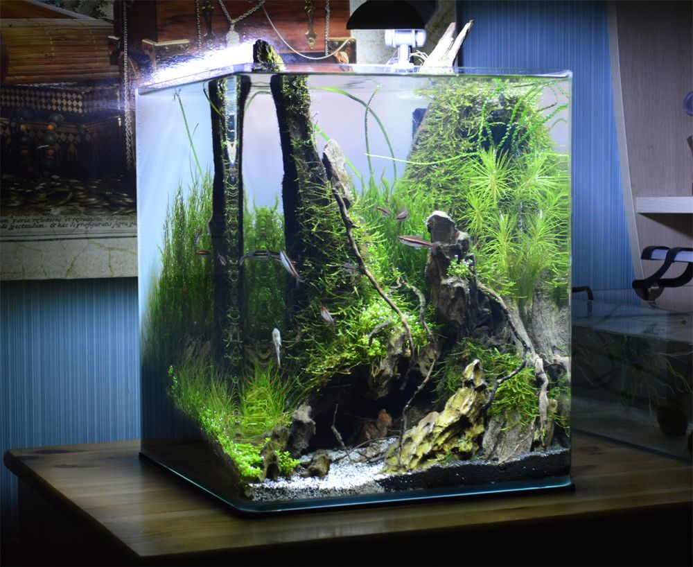 Dennerle Nano Cube Contest 2013 Quality Test Results Vse Dlya Akvariuma Terrariuma I Pruda Fresh Water Fish Tank Aquarium Fish Tank Nano Aquarium