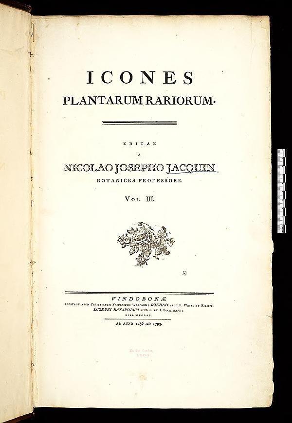 Icones plantarum rariorum