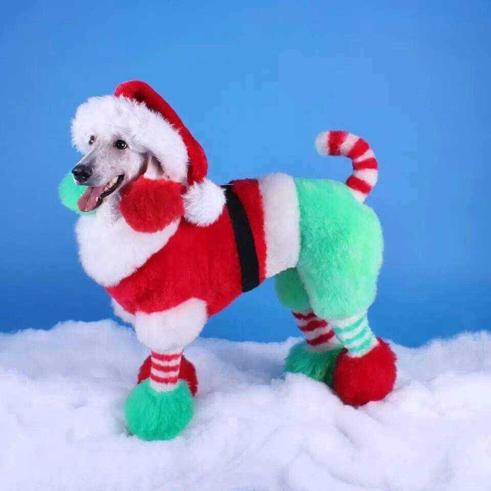 Castle Creek Pet Resort And Spa Creative Grooming Pet Resort Christmas Dog
