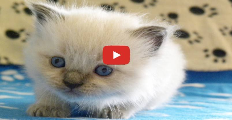 """Kittens Time Lapse"" 50 days in 5 minutes !!"