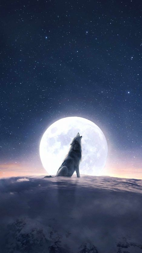 410+Moon Wolf Howl IPhone Wallpaper   IPhone Wallpapers