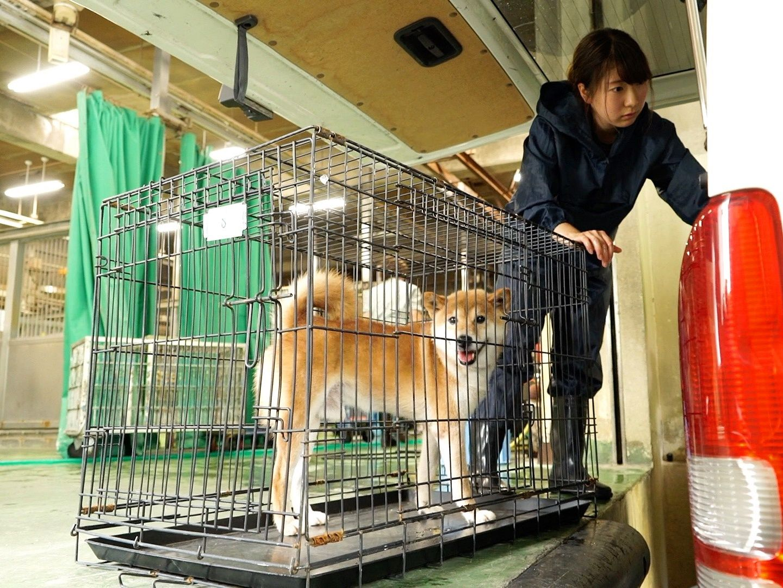 Qa Image01 ジャパン 動物愛護 動物保護
