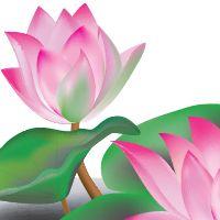 Create A Lotus Flower With Adobe Illustrator Cs5 Via Vector