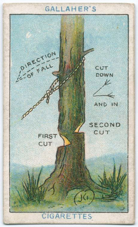 How To Fell A Tree