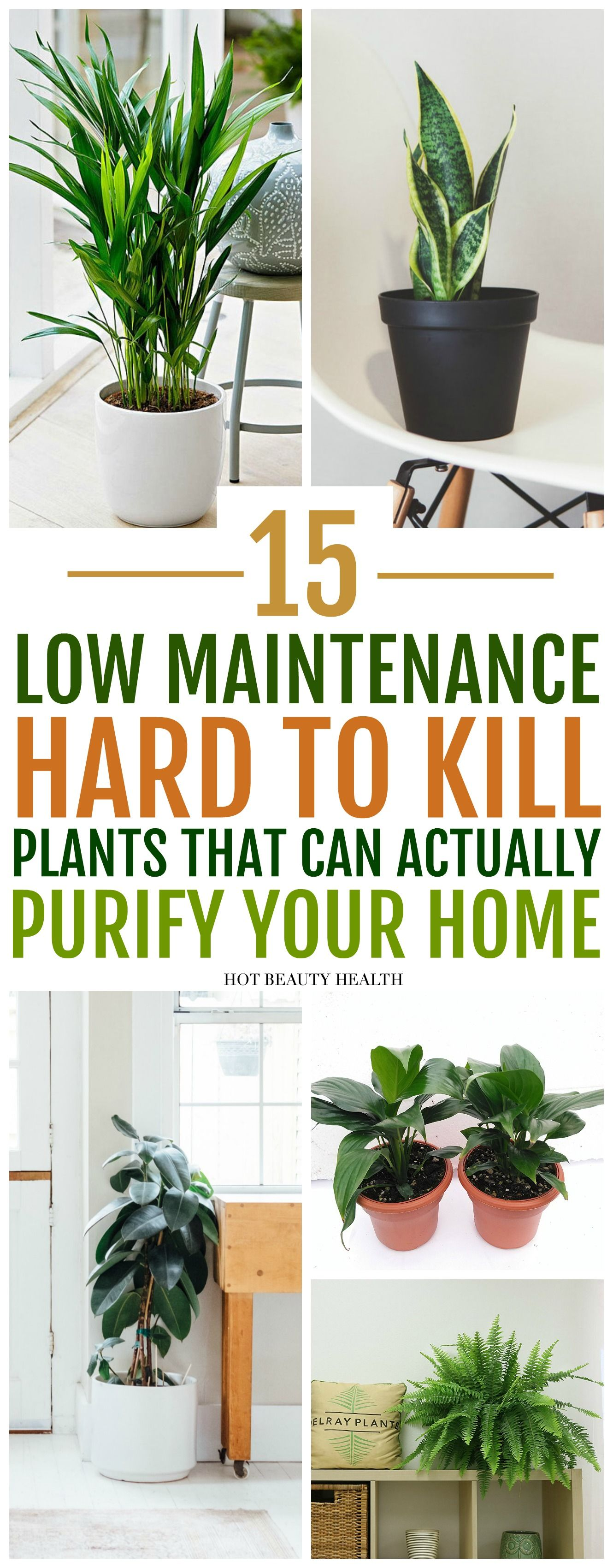 The best air purifying plants that are super low maintenance and hard to kill. According to NASA, these types of houseplants ( ex: gerbera daises, snake plants, peace lily, boston ferns, and more) are great for indoors to clean the air. Place anywhere inside your home as decor like bedrooms, bathroom and kitchen or at the office. Many need only low light and are also pet safe. via @dajih