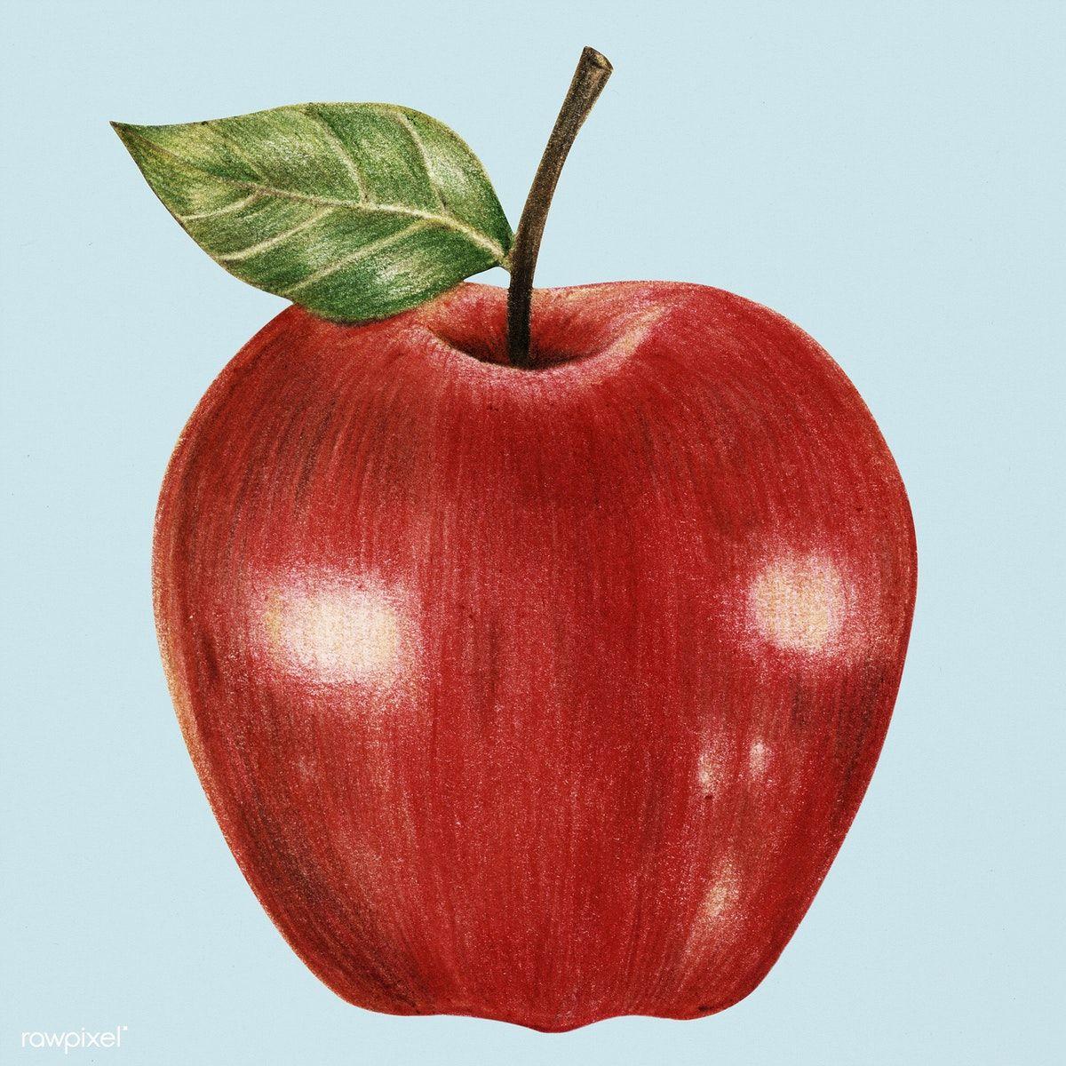 Download Premium Illustration Of Hand Drawn Red Apple Illustration 262383 Apple Illustration Drawing Apple Fruits Drawing