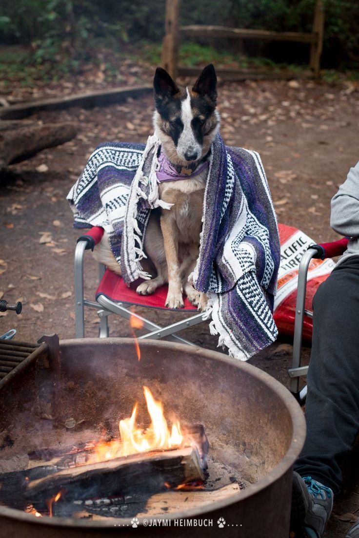 Photo of Camping tips: How to enjoy the great outdoors with your dog
