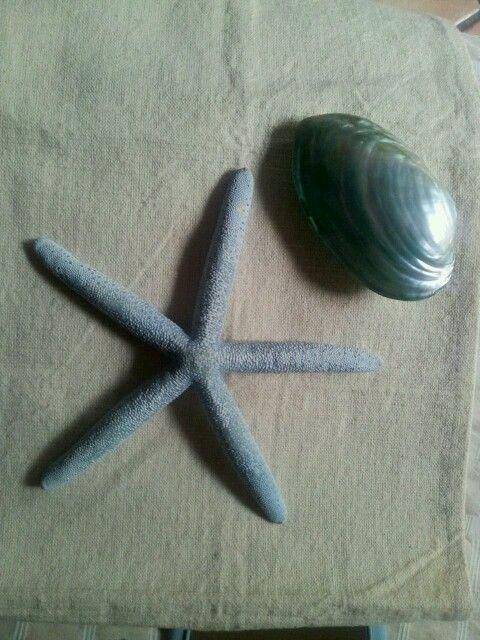 Estrella y concha azules
